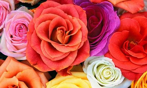 65.-Конкурс-Цветы-для-милых-дам